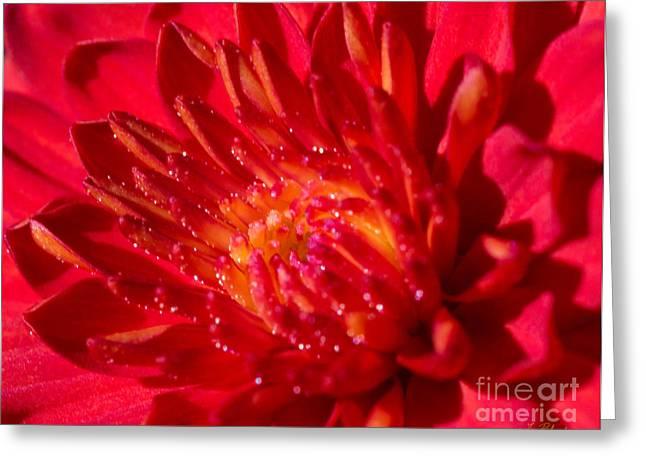Asters Greeting Cards - Chrysanthemum - Asteraceae Greeting Card by Iris Richardson