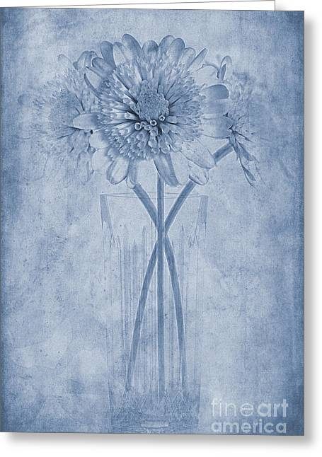 Close Focus Floral Greeting Cards - Chrysanthemum Cyanotype Greeting Card by John Edwards