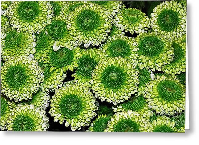 Chrysanthemum Green Button Pompon Kermit Greeting Card by Kaye Menner