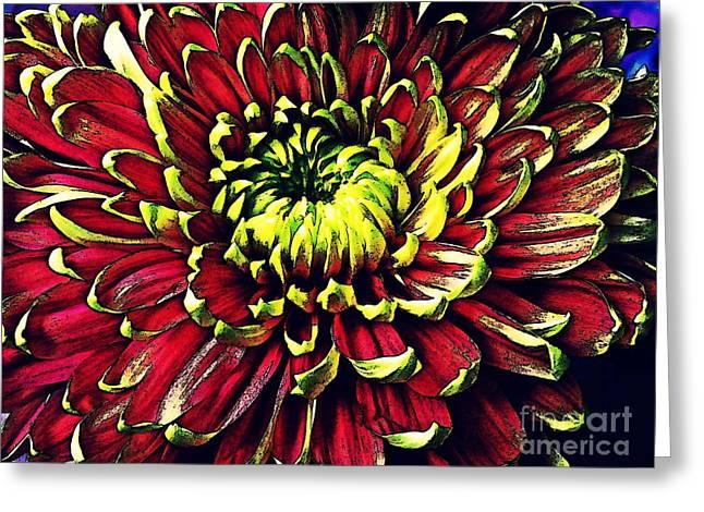 Sarah Loft Greeting Cards - Chrysanthemum in Red and Yellow Greeting Card by Sarah Loft