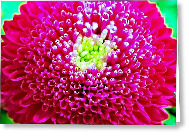Rose Petals Greeting Cards - Chrysanthemum Painting Greeting Card by  Bob and Nadine Johnston