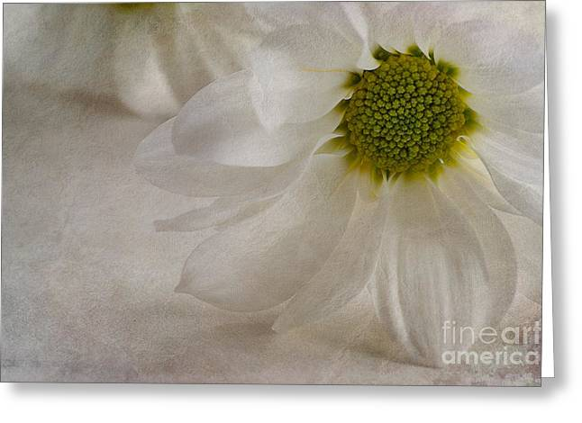 Close Focus Floral Greeting Cards - Chrysanthemum textures Greeting Card by John Edwards