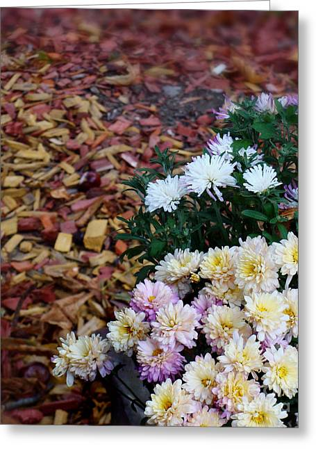 White Pyrography Greeting Cards - Chrysanthemums in the forest Greeting Card by Ioana Ciurariu