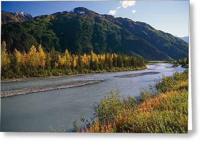 Chugach Mountains Portage Creek Fall Sc Greeting Card by Jeff Schultz