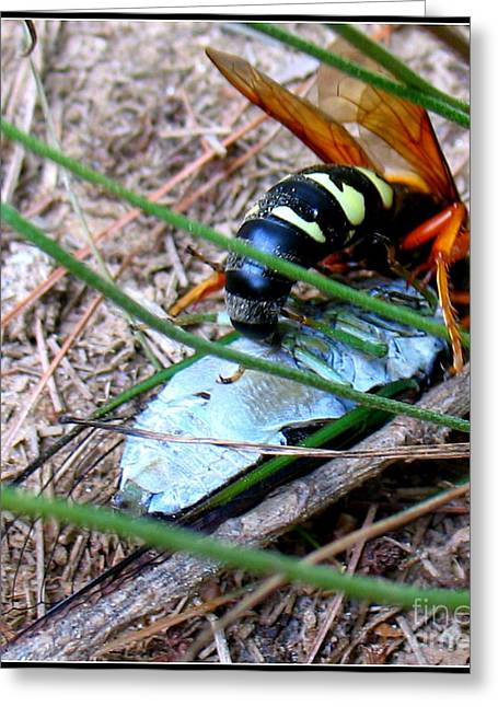 Paralyzed Greeting Cards - Cicada Killer Greeting Card by Patti Whitten
