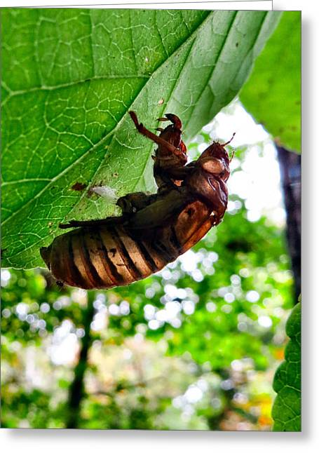 Cocoon Greeting Cards - Cicada Greeting Card by Michelle Milano