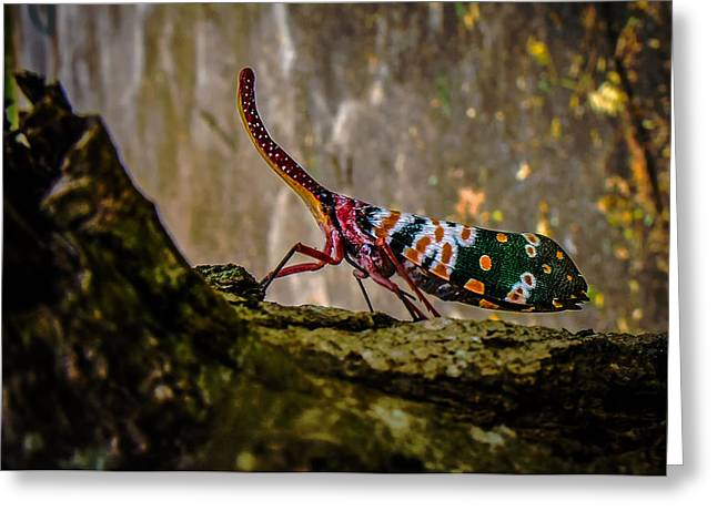 Cicada Greeting Cards - Cicada Greeting Card by Mountain Dreams