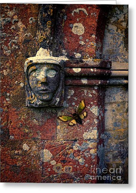 Cicada Greeting Cards - Cicada on Old Stone Wall Greeting Card by Jill Battaglia