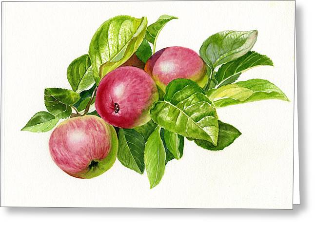 Cider Apples With White Background Greeting Card by Sharon Freeman