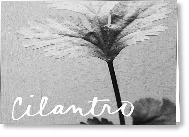 Photography Mixed Media Greeting Cards - Cilantro Greeting Card by Linda Woods