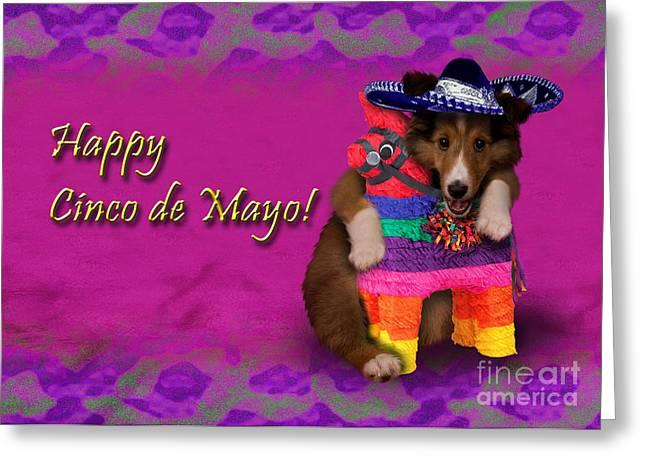 Wildlife Celebration Greeting Cards - Cinco de Mayo Shetland Sheepdog Greeting Card by Jeanette K