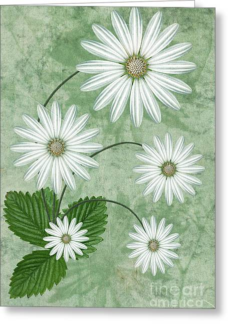 Abstract Flower Greeting Cards - Cinco Greeting Card by John Edwards