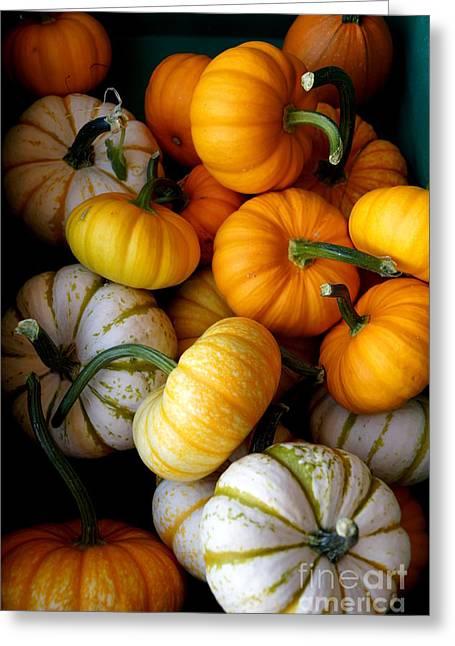 Samhain Greeting Cards - Cinderella Pumpkin Pile Greeting Card by Kerri Mortenson