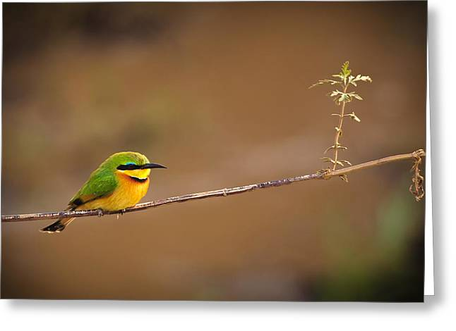 Avian Greeting Cards - Cinnamon-chested Bee-eater Greeting Card by Adam Romanowicz