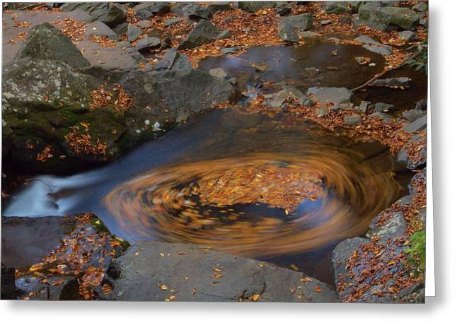 Roaring Falls Greeting Cards - Circle Of Autumn Leaves Greeting Card by Dan Sproul