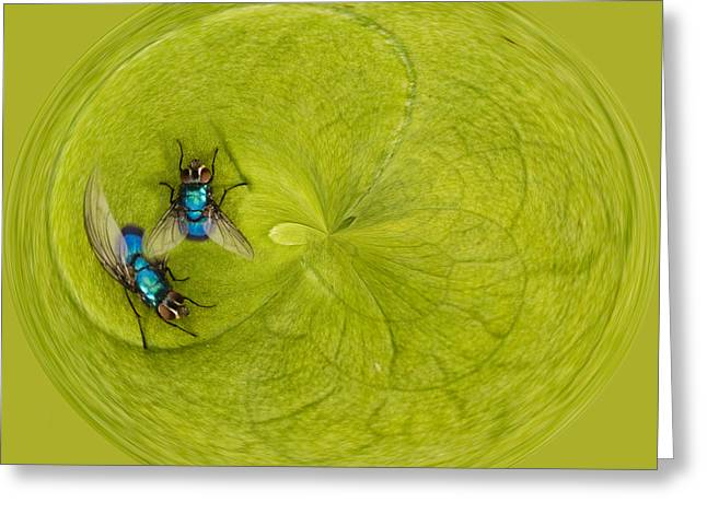 Circling Greeting Cards - Circle of flies Greeting Card by Jean Noren