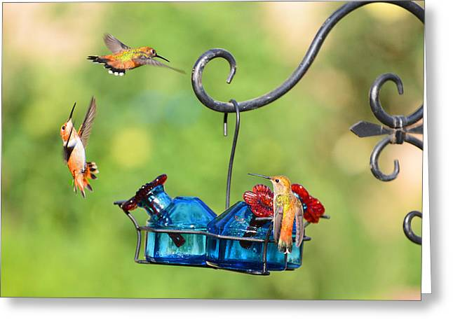 Migrating Hummingbird Greeting Cards - Circle of Life Greeting Card by Lynn Bauer