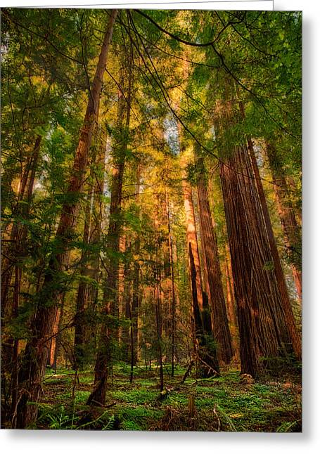 Paint Photograph Greeting Cards - Circle of Light - California Redwoods Greeting Card by Dan Carmichael