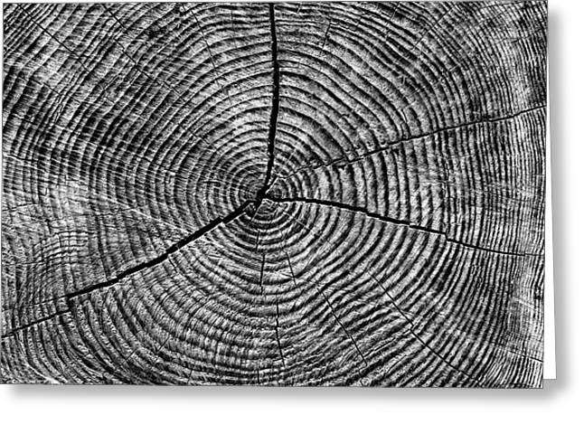 Textural Greeting Cards - Circles of Time Greeting Card by Tim Gainey