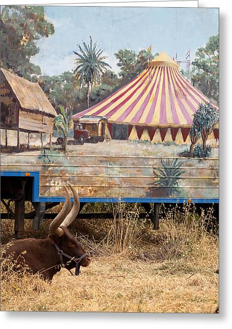 Tamer Greeting Cards - circus circus 1 - A vintage circus wagon with african paint and a long horn bovine Greeting Card by Pedro Cardona