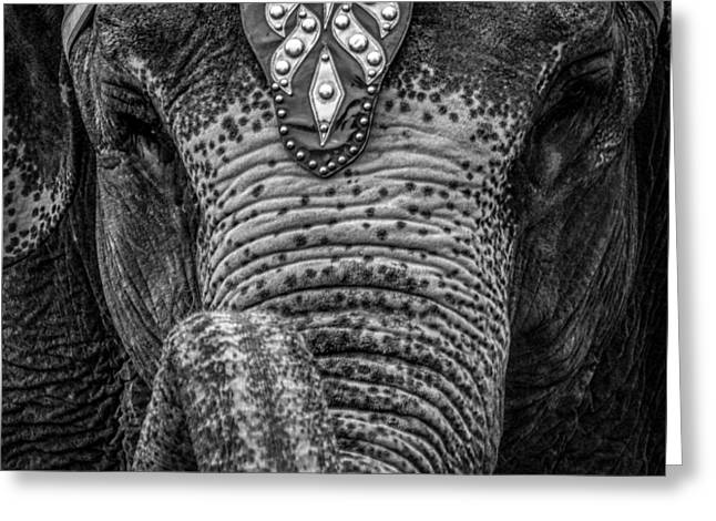 Circus Elephant Greeting Card by Bob Orsillo
