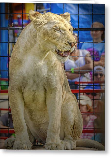 Lioness Greeting Cards - Circus Lion Greeting Card by LeeAnn McLaneGoetz McLaneGoetzStudioLLCcom