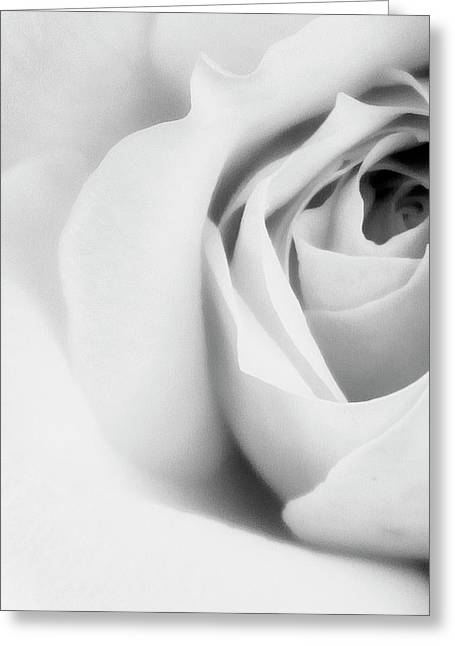 Citrine Rose Bw Palm Springs Greeting Card by William Dey