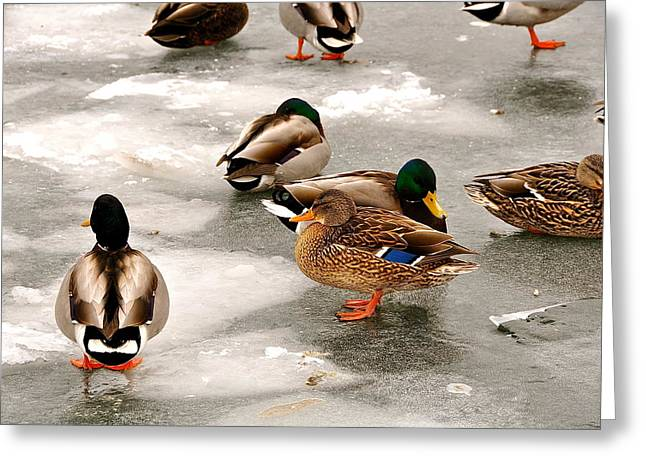 Flocks Of Ducks Greeting Cards - City Center Greeting Card by Catherine Renzini