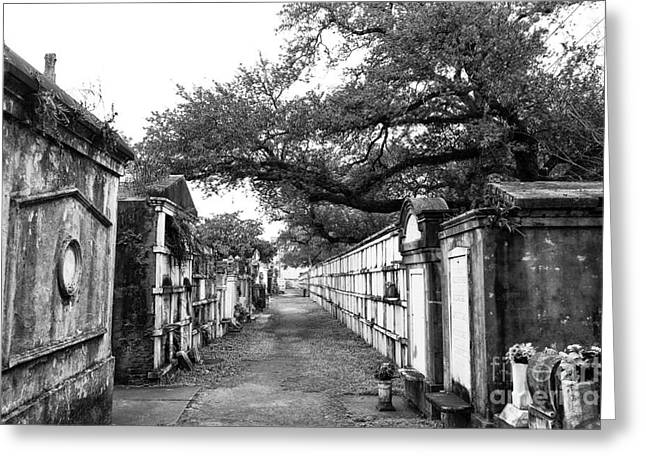 Crescent City Greeting Cards - City of the Dead mono Greeting Card by John Rizzuto