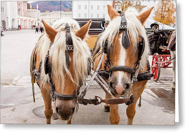 Cityscape Horse Carriage Salzburg Greeting Card by Tom Norring