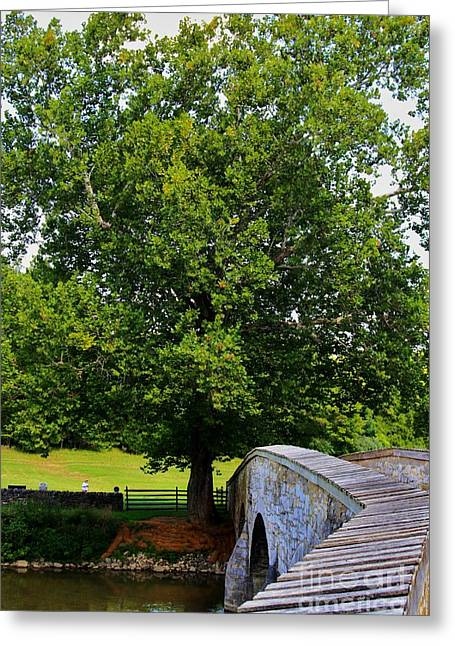 Battlefield Site Greeting Cards - Civil War Era Eastern Sycamore Tree Greeting Card by Patti Whitten