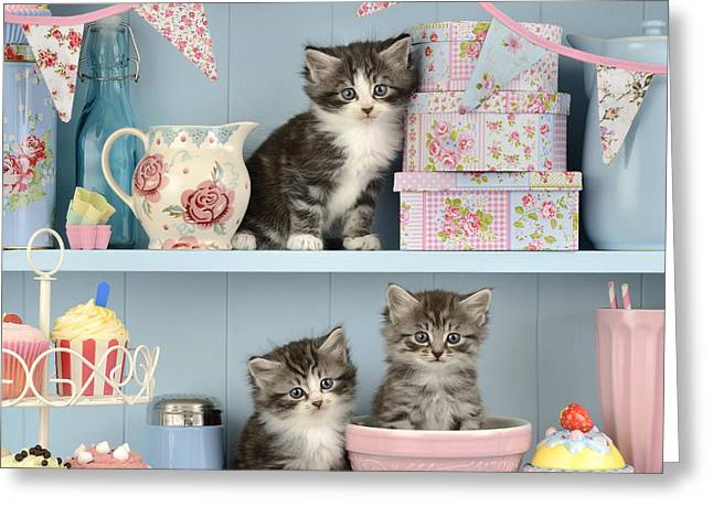 Biscuit Greeting Cards - Baking Shelf Kittens Greeting Card by Greg Cuddiford
