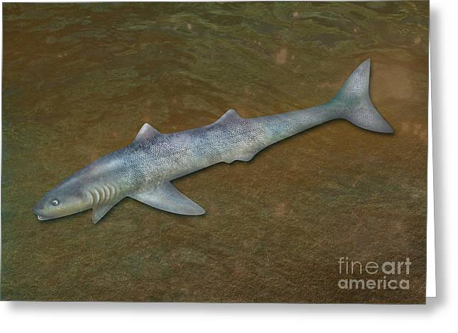 Fossil Art Greeting Cards - Cladoselache, Extinct Shark Greeting Card by Gwen Shockey