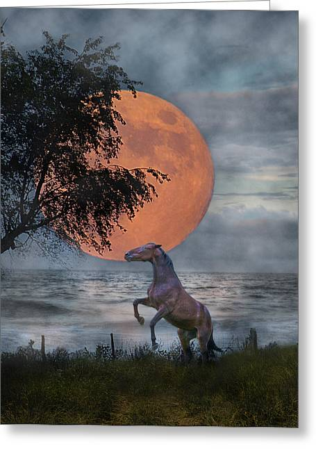 Sea Moon Full Moon Greeting Cards - Claiming the Moon Greeting Card by Betsy C  Knapp