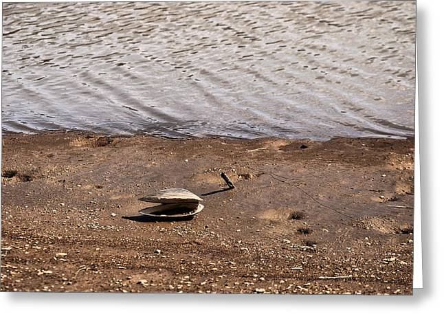 Landscape Posters Greeting Cards - Clam On The Beech Greeting Card by Chris Flees