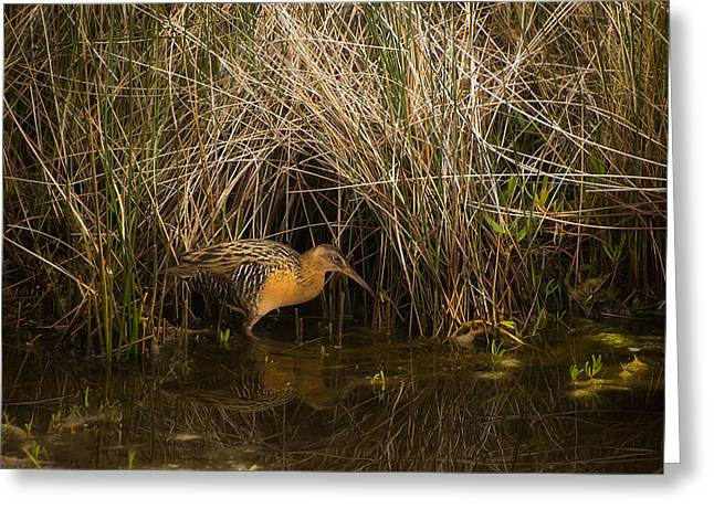 Carrao Greeting Cards - Clapper Rail Greeting Card by Rich Leighton