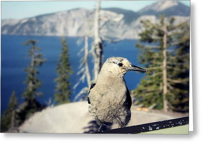 Melanie Lankford Photography Greeting Cards - Clarks Nutcracker Greeting Card by Melanie Lankford Photography