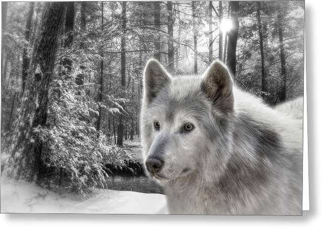 Wolf Creek Greeting Cards - Clarks Wolf Greeting Card by Lori Deiter