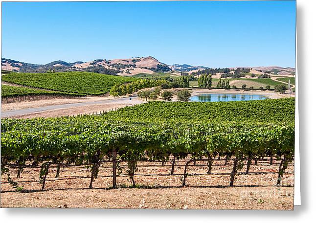 Wine Pour Photographs Greeting Cards - Classic Napa - Cuvaison Winery and vineyard in Napa Valley. Greeting Card by Jamie Pham