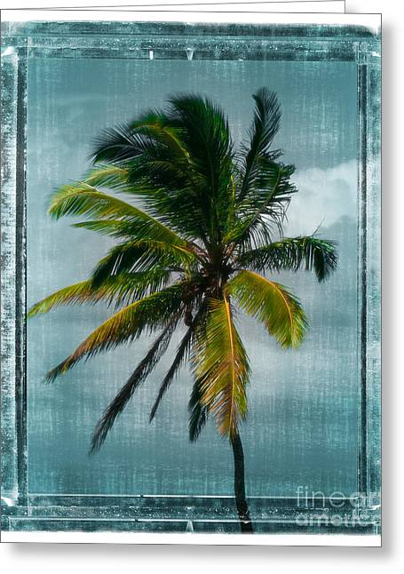 Best Ocean Photography Greeting Cards - Classic Palm Greeting Card by Perry Webster