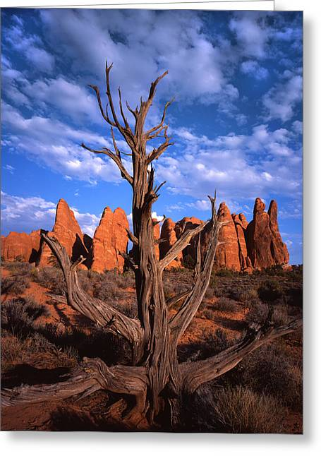 Arches National Park Pine Trees Greeting Cards - Classic Western Scene Greeting Card by Ray Mathis