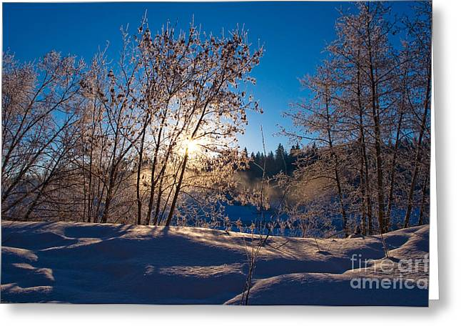 Winter Photographs Greeting Cards - Classic Winters Day Greeting Card by Terry Elniski