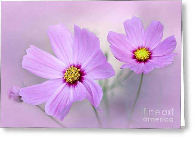 Florida Flowers Greeting Cards - Classy and Cosmopolitan Greeting Card by Sabrina L Ryan