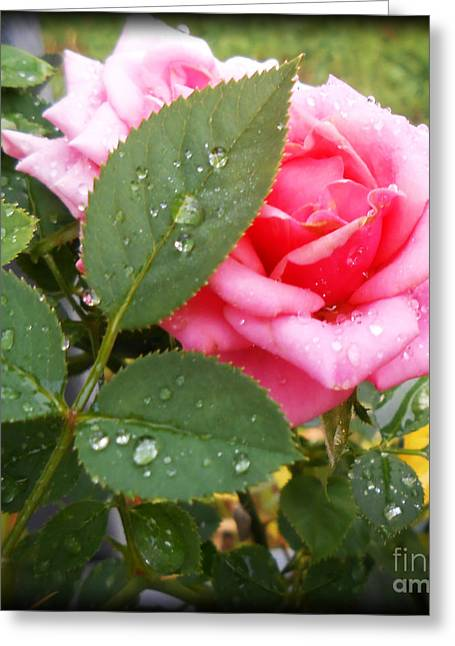 Whiteoaks Photography Greeting Cards - Cleansing Rain and the Rose Greeting Card by Eva Thomas