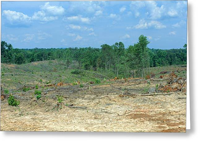 Clear Cutting In The Blue Ridge Greeting Card by Panoramic Images