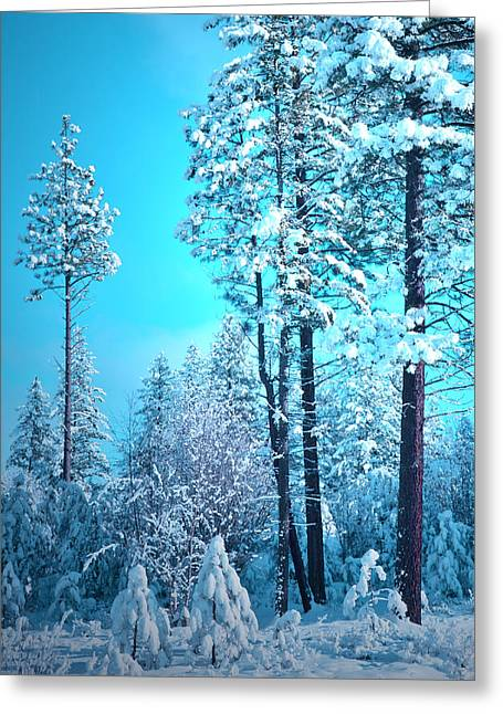 Coldness Greeting Cards - Clear Skies and Snow Greeting Card by Tara Turner