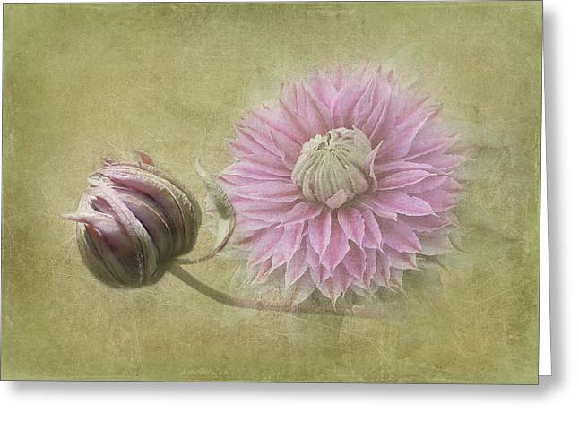Unfold Greeting Cards - Clematis Beauty Greeting Card by Angie Vogel