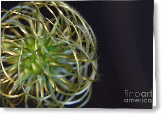 Art Photography Greeting Cards - Clematis Close up Flower Greeting Card by Art Photography