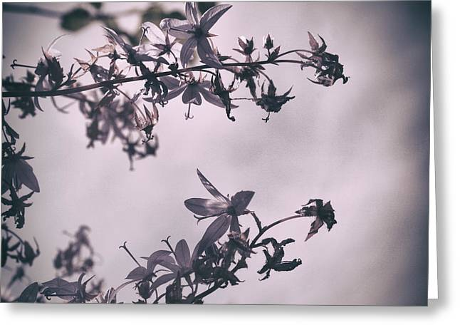 Violett Greeting Cards - Clematis in Spring Greeting Card by Nomad Art And  Design