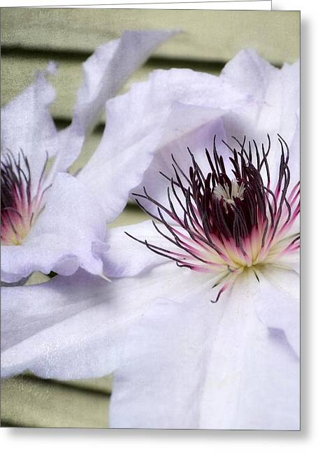 Clematis In Spring Greeting Card by Michelle Calkins